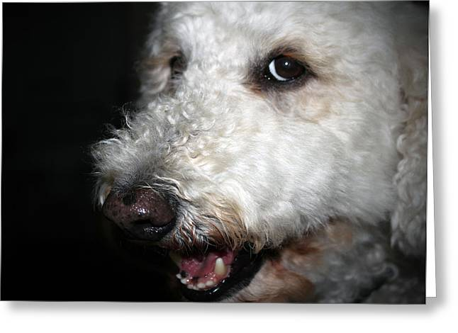 Pet Therapy Greeting Cards - Jake Up Close Greeting Card by Cynthia Guinn