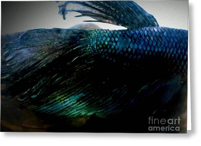 Betta Greeting Cards - JaKhodas Closed Fins Greeting Card by LKB Art and Photography