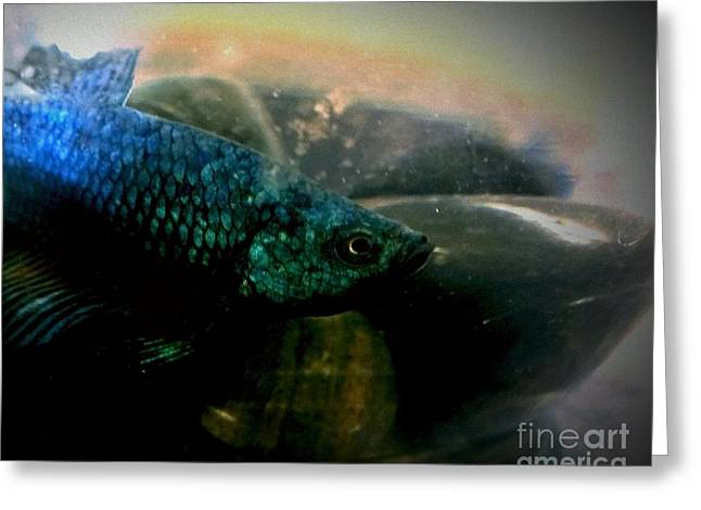 Betta Greeting Cards - Jakhodas face Greeting Card by LKB Art and Photography