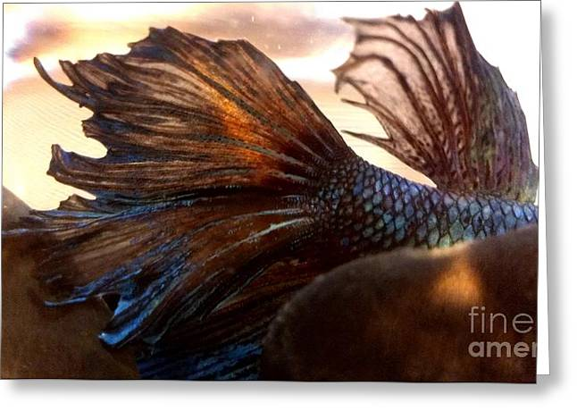 Betta Greeting Cards - JaKhodas Natural Greeting Card by LKB Art and Photography