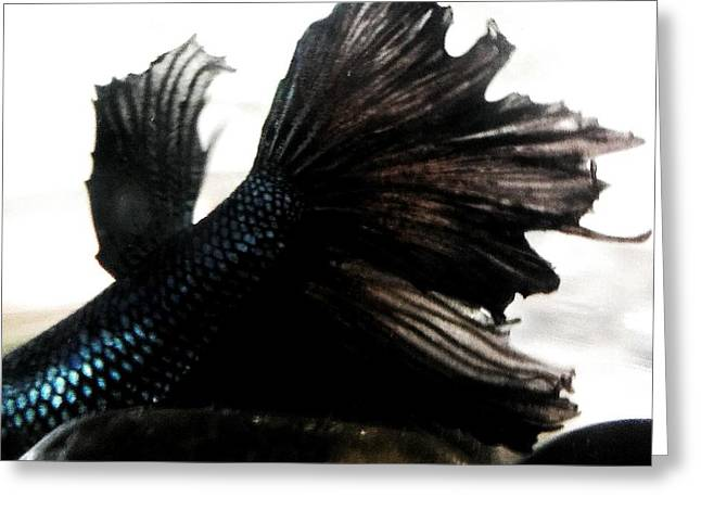 Betta Greeting Cards - JaKhodas tail fin Greeting Card by LKB Art and Photography