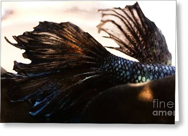 Betta Greeting Cards - Jakhotas Fins Greeting Card by LKB Art and Photography