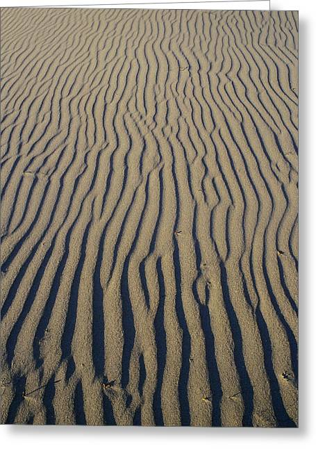 Sand Pattern Greeting Cards - Jalama Beach Sand Pattern Greeting Card by Rich Reid