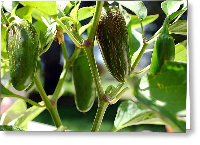 Food And Beverages Greeting Cards - Jalapenos Greeting Card by Heather S Huston