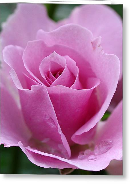 Tea Rose Greeting Cards - James Kelleher Rose Garden  Greeting Card by Juergen Roth