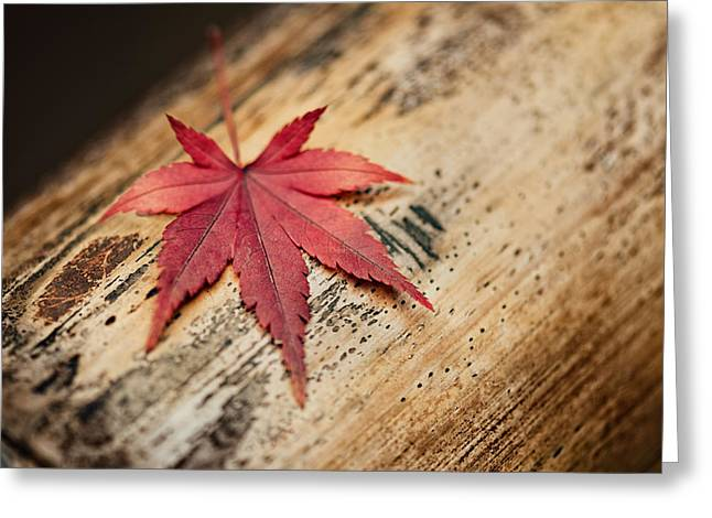 Turning Leaves Greeting Cards - Japanese Autumn Greeting Card by Ulrich Schade