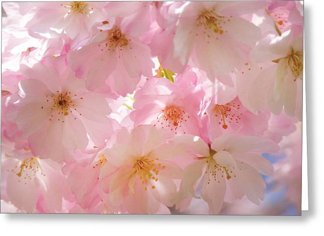 Japanese Cherry Blossom Beauty Greeting Card by Georgiana Romanovna