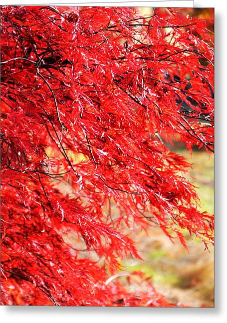 Searcy Greeting Cards - Japanese Maple 9 Greeting Card by Tanya  Searcy