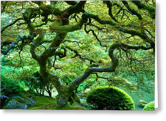 Japanese Maple Greeting Card by Bryn Berg