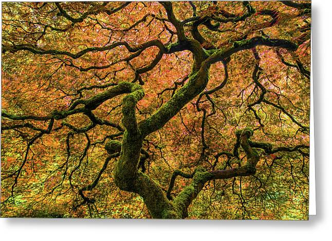 Japanese Maple Tree Greeting Card by Larry Marshall