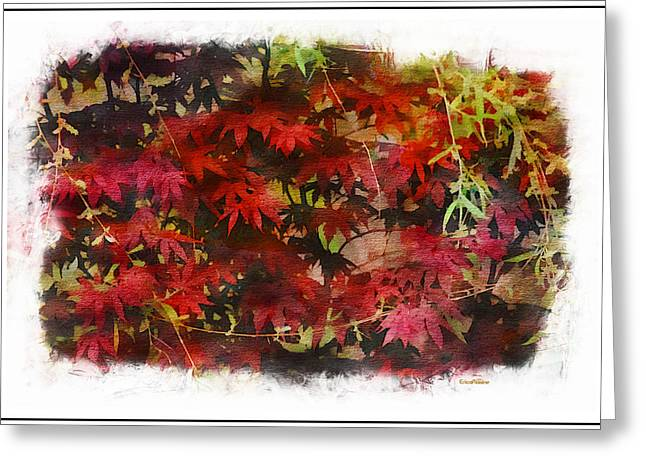 Weeping Greeting Cards - Japanese Maple Under the Willow Greeting Card by EricaMaxine  Price