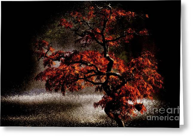 Van Dusen Botanical Garden Greeting Cards - Japanese Maple Greeting Card by Venetta Archer