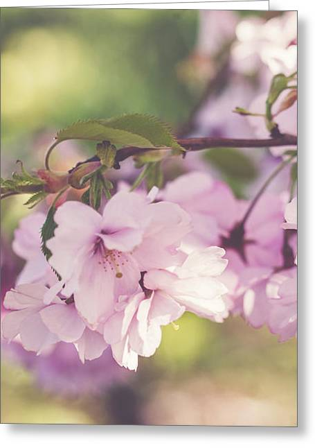 Japanese Tree In Bloom Greeting Card by Cindy Grundsten