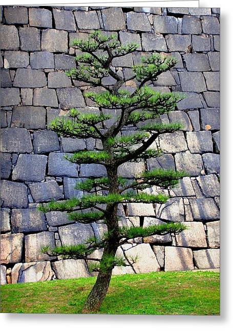 Osaka Greeting Cards - Japanese Tree Greeting Card by Roberto Alamino