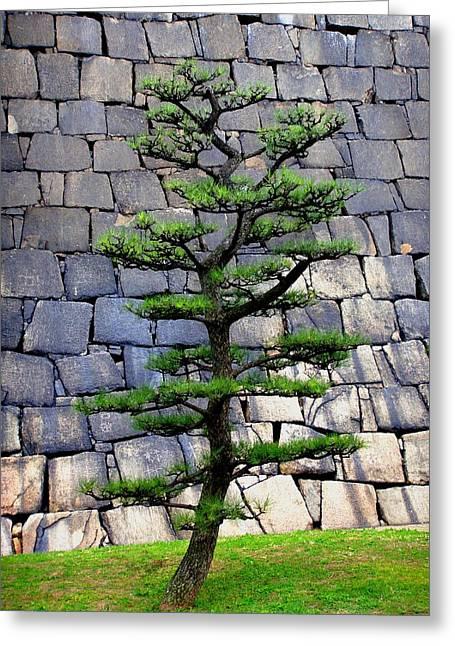 Roberto Alamino Greeting Cards - Japanese Tree Greeting Card by Roberto Alamino