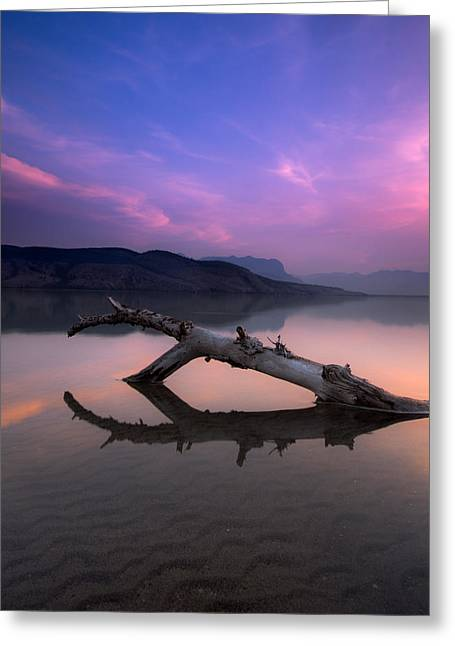 Sony Greeting Cards - Jasper Lake Log Greeting Card by Cale Best