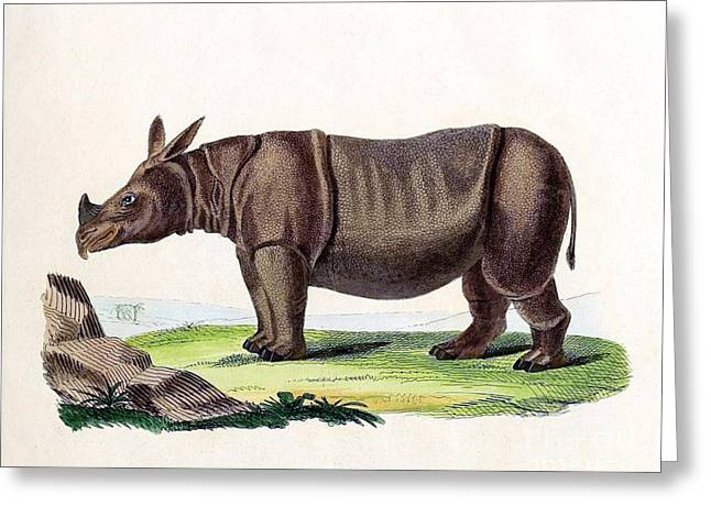 Critically Endangered Species Greeting Cards - Javan Rhinoceros, Endangered Species Greeting Card by Biodiversity Heritage Library