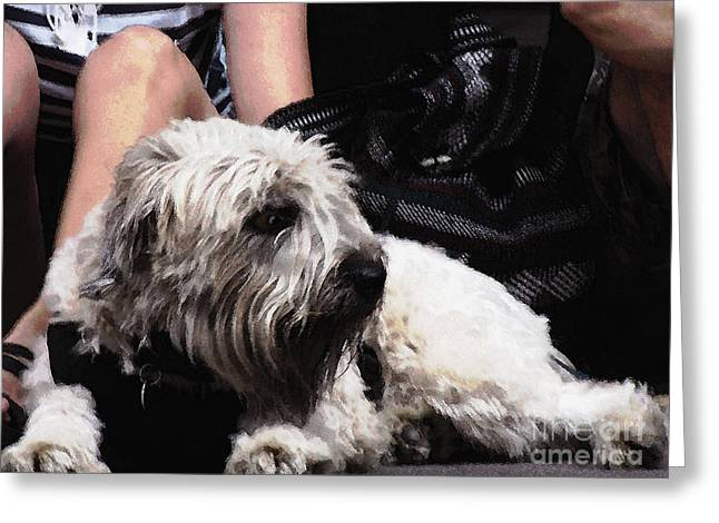 Puppy Digital Art Greeting Cards - Jazzed Pooch Greeting Card by Phil Welsher