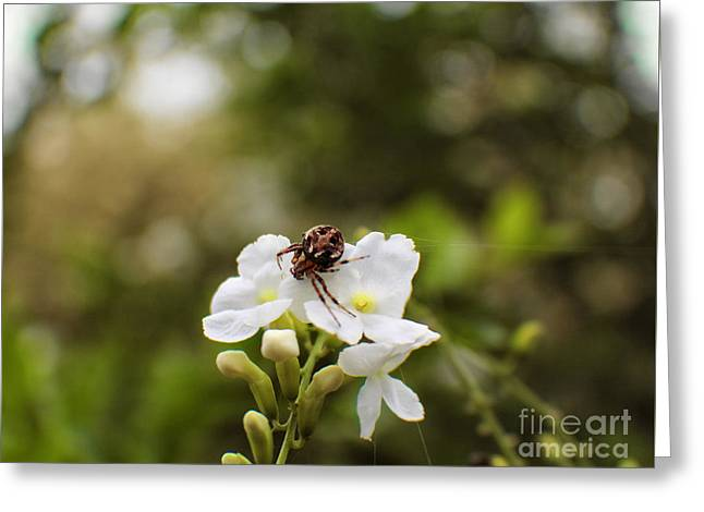 Botanical Greeting Cards - Jeepers Creepers in my Garden Greeting Card by Ella Kaye Dickey
