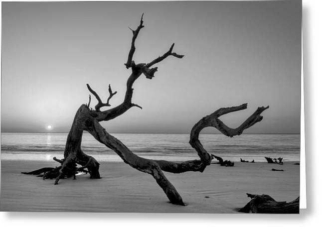 Jekyll Island Driftwood In Black And White Greeting Card by Greg Mimbs