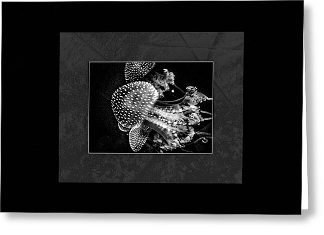 Jelly Fish Greeting Cards - Jelly Fish Cnidarian Quallen Greeting Card by Mona Stut