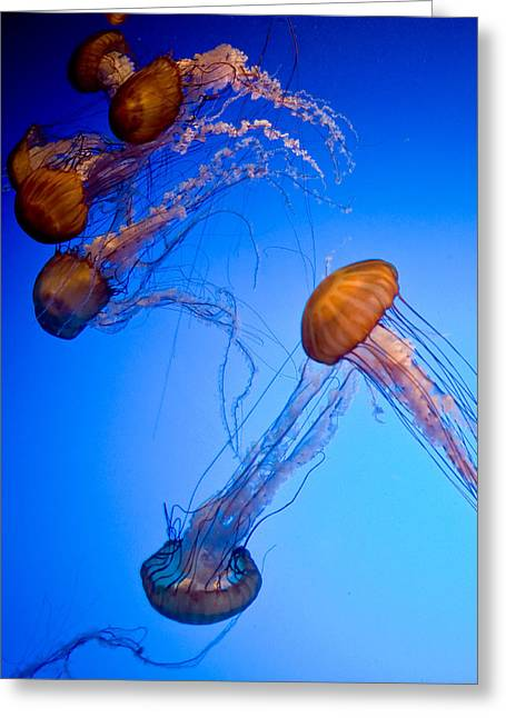 Jelly Fish Iv Greeting Card by James Dricker