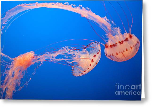 Jelly Fish Greeting Cards - Jelly Fishes Greeting Card by Atul Nema
