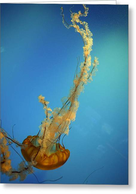 Jelly Fish Greeting Cards - Jelly Greeting Card by Kathryn Ferreira