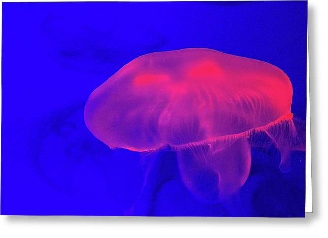 Jellyfish Greeting Card by Martin Newman