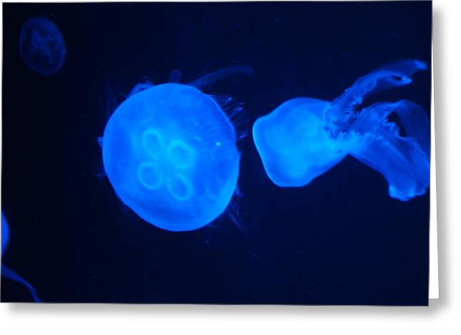 Drifter Photographs Greeting Cards - JellyFish Greeting Card by Michael Clack