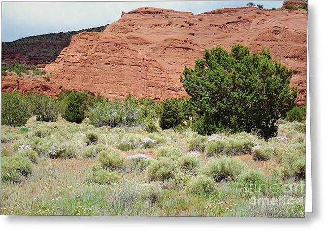 Jemez Mountains Greeting Cards - Jemez Red Rock Mountain Field Greeting Card by Andrea Hazel Ihlefeld