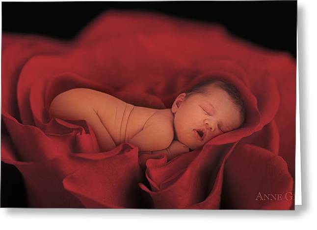 Red Petals Greeting Cards - Jersey in Rose Greeting Card by Anne Geddes