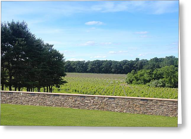 Grape Vineyard Greeting Cards - New Jersey Harvest Greeting Card by Brian Manfra