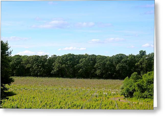 Jersey Vineyard Greeting Card by Brian Manfra