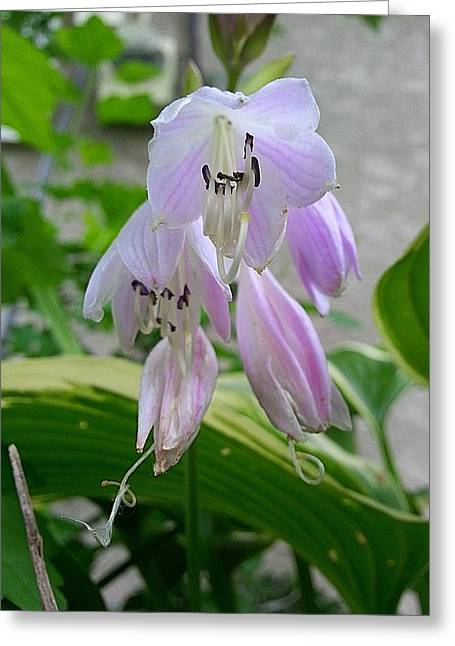 Recently Sold -  - March Greeting Cards - Jimmy Hosta Greeting Card by John Savala