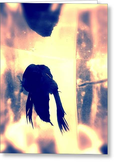 Betta Greeting Cards - Jixen Greeting Card by LKB Art and Photography