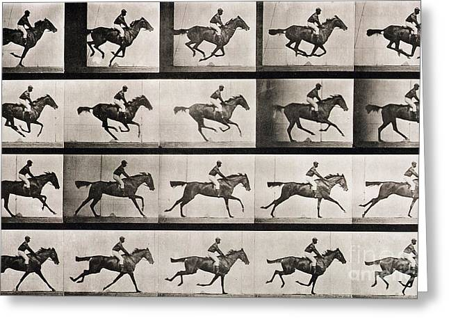 Equestrian Prints Photographs Greeting Cards - Jockey on a galloping horse Greeting Card by Eadweard Muybridge