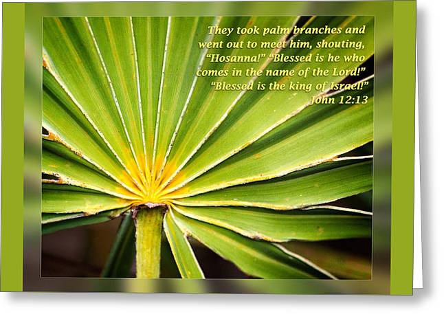 Easter Greeting Cards - John 12 13 Greeting Card by Dawn Currie
