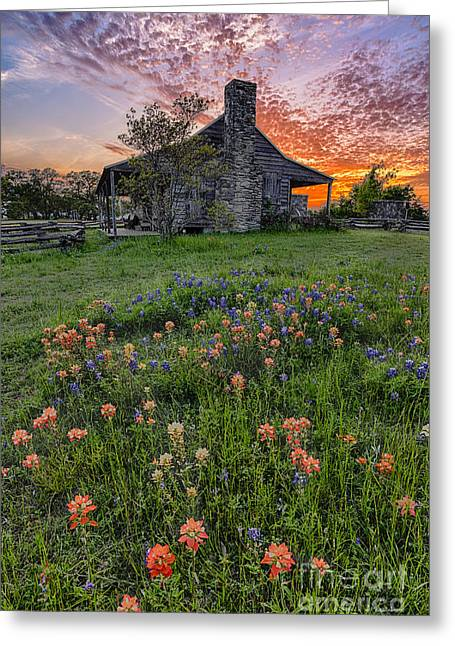 Dog Trots Photographs Greeting Cards - John P Coles Cabin and Spring Wildflowers at Independence - Old Baylor Park Brenham Texas Greeting Card by Silvio Ligutti