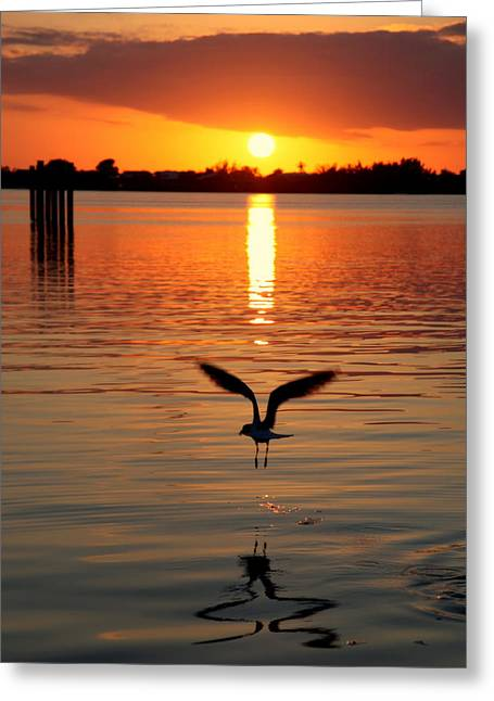 Reflection In Water Greeting Cards - Jonathan Livingston Seagull Greeting Card by Karen Wiles