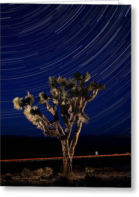 Star Death Greeting Cards - Joshua Tree And Star Trails Greeting Card by Steve Gadomski