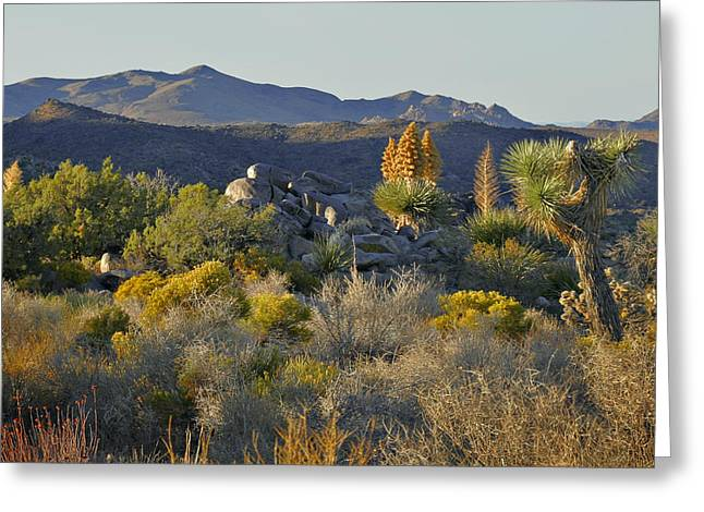 Haze Photographs Greeting Cards - Joshua Tree National Park in California Greeting Card by Christine Till
