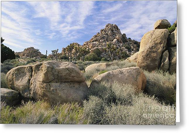 Californian Greeting Cards - Joshua Tree National Park Greeting Card by Jeffrey Lepore