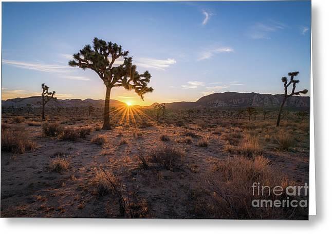 Joshua Tree Sunrise  Greeting Card by Michael Ver Sprill