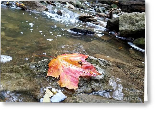 Journey Of A Leaf Greeting Card by Scott D Van Osdol