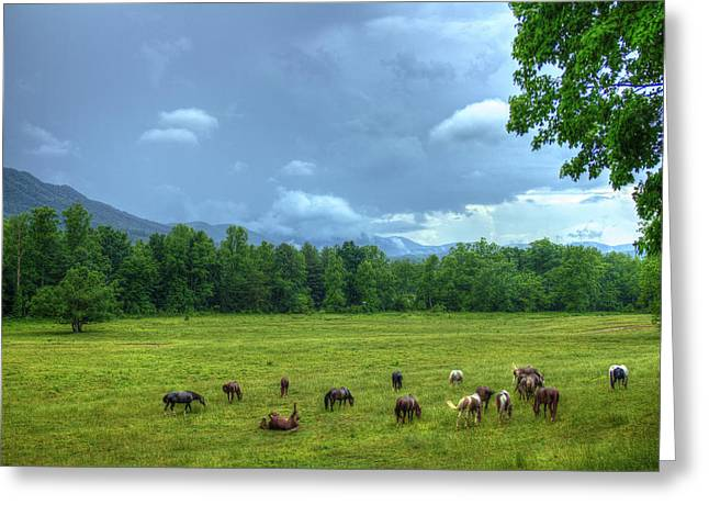 National Historic District Greeting Cards - Joy After A Rain Cades Cove Horses Greeting Card by Reid Callaway