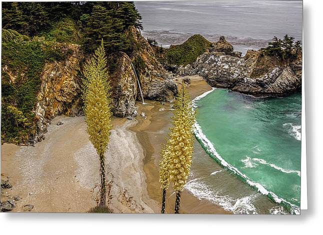Julia Pfeiffer Burns State Park Greeting Card by Maria Coulson