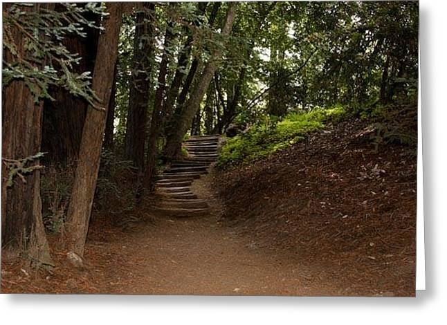 Big Sur Greeting Cards - Julia Pfeiffer Burns State Park Greeting Card by Patricia  Wensel