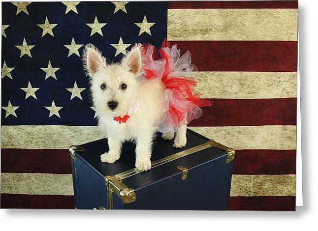 Puppies Photographs Greeting Cards - July 4th Westie Greeting Card by Amanda Stadther