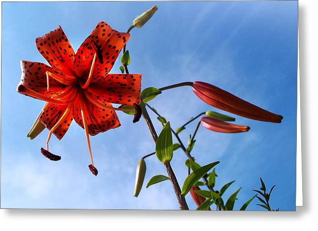 Day Lilly Greeting Cards - July Greeting Card by Joy Nichols